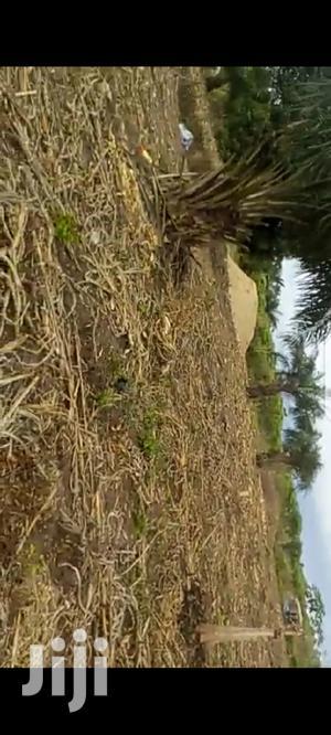 Lands for Sale in Sunyani Yawhima | Land & Plots For Sale for sale in Brong Ahafo, Sunyani Municipal