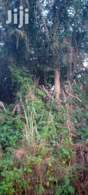 10 Acres of Farm Land on Sale.   Land & Plots For Sale for sale in Ashanti, Ejisu-Juaben Municipal