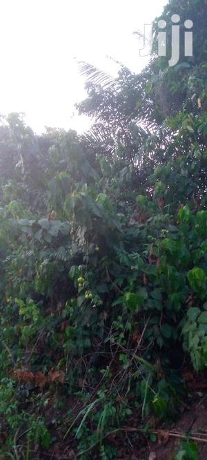 15 Acres of Farmland for Sale.   Land & Plots For Sale for sale in Ashanti, Ejisu-Juaben Municipal