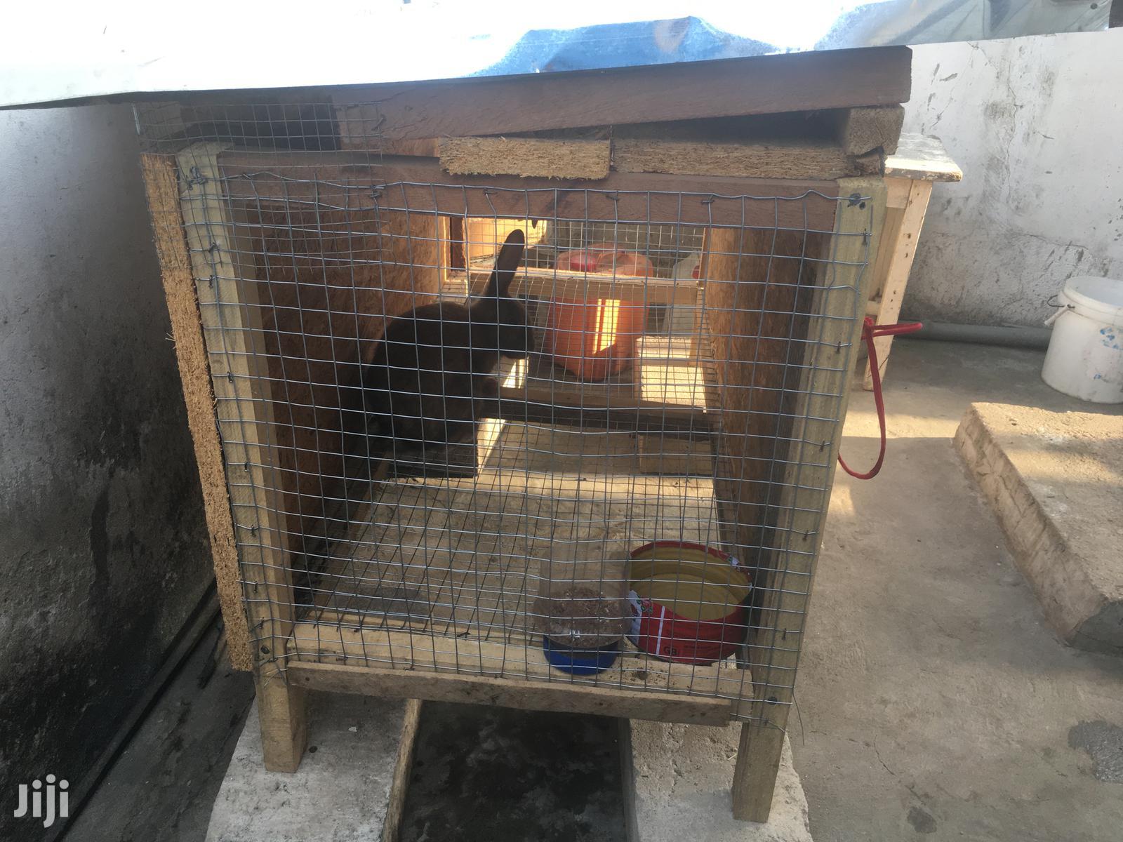 Archive: Rabbit Cage