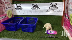 3-6 Month Male Purebred Maltese | Dogs & Puppies for sale in Nungua, Teshie-Nungua Estates