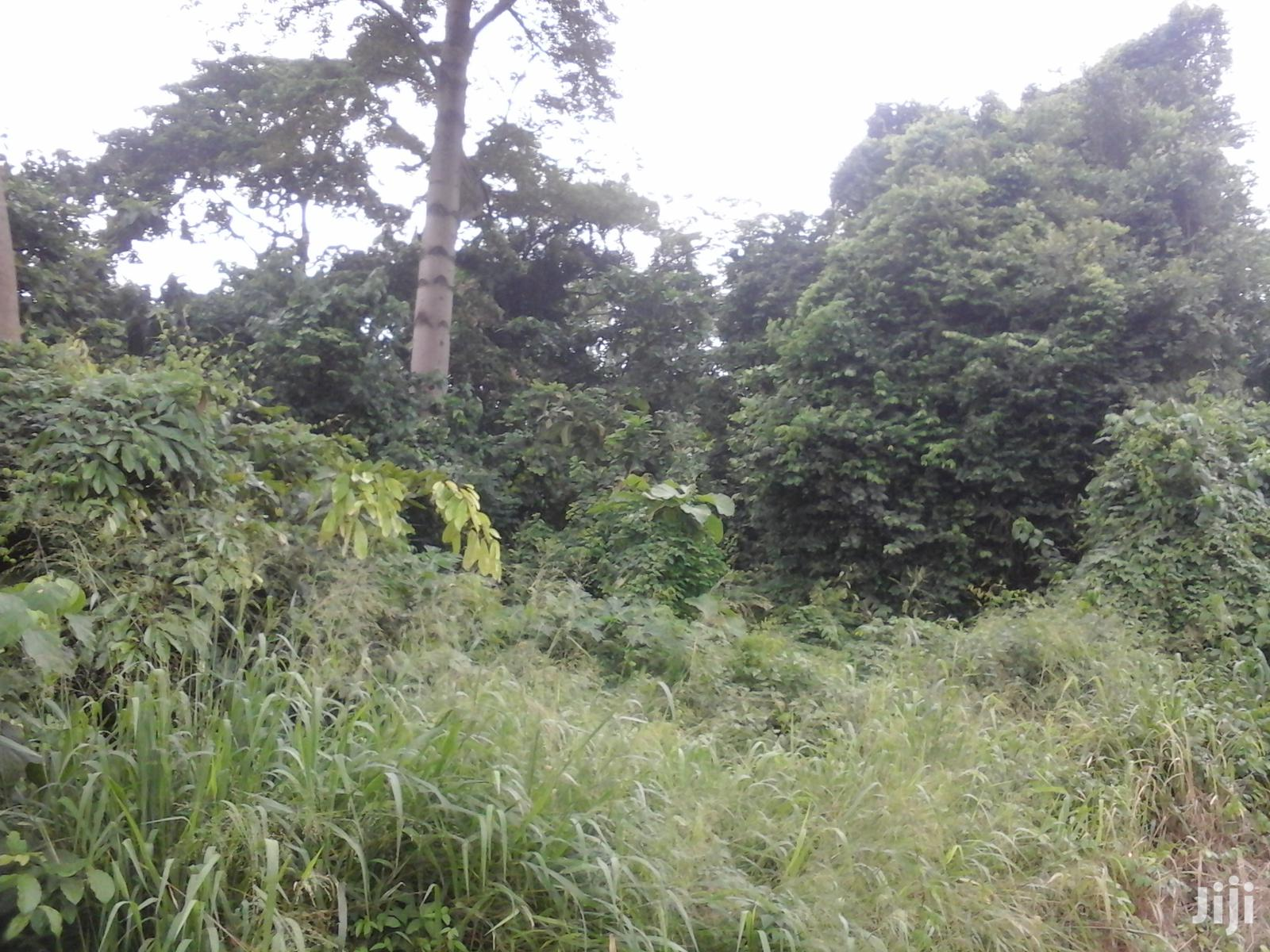 30 Acres Of Farmland For Sale At Sunyani - Odumase | Land & Plots For Sale for sale in Sunyani Municipal, Brong Ahafo, Ghana