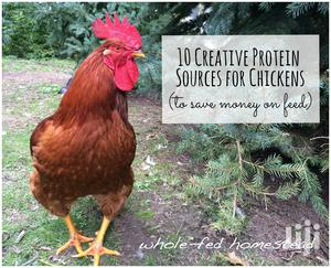 Local Chicken Farming   Livestock & Poultry for sale in Greater Accra, Ga West Municipal