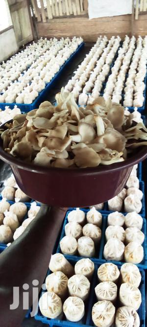 Nature Fresh Oyster Mushrooms   Meals & Drinks for sale in Central Region, Awutu Senya East Municipal
