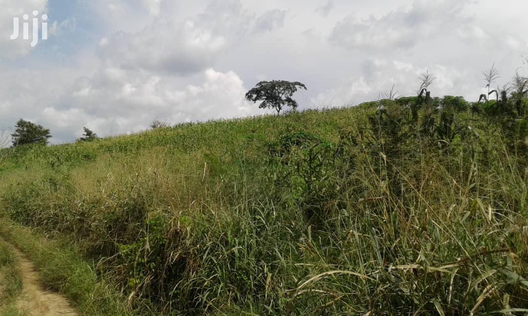 ANUM-BOSO AREA, E/R - Lease 600+ Acres Mixed Farmland