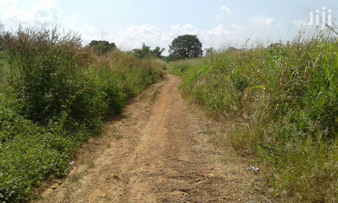 ANUM-BOSO AREA, E/R - Lease 600+ Acres Mixed Farmland | Land & Plots for Rent for sale in Asuogyaman, Eastern Region, Ghana