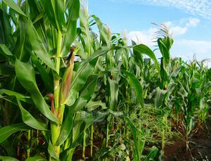 Farmland for Sale at Amansama, Aburi and Nsawam   Land & Plots For Sale for sale in Eastern Region, Akuapim North