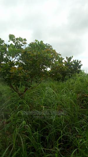 12 Acres of Cashew Farm for Sale | Land & Plots For Sale for sale in Brong Ahafo, Sunyani Municipal