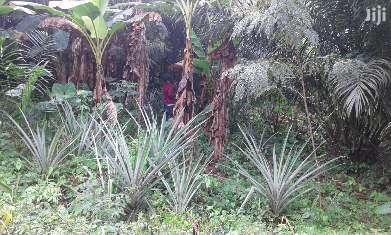 15 Acres of Virgin Farmland for Sale | Land & Plots For Sale for sale in New-Juaben Municipal, Eastern Region, Ghana