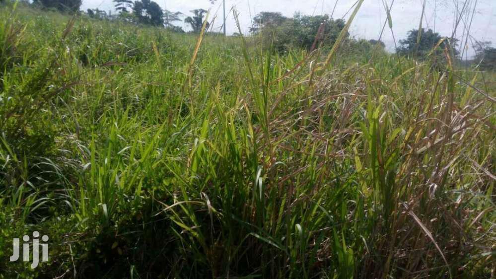 Archive: Farming Lands Available