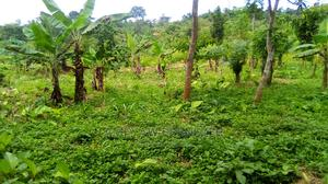 15 Acres of Farmland   Land & Plots For Sale for sale in Eastern Region, Birim North