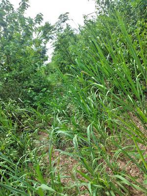 Plots at Dumesua Litigation Free | Land & Plots For Sale for sale in Brong Ahafo, Sunyani Municipal