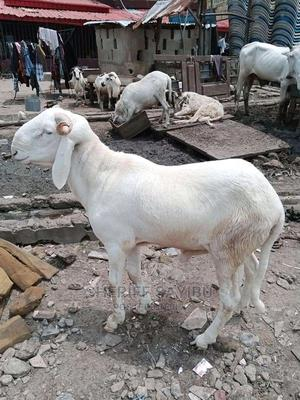 Good Products for You | Other Animals for sale in Northern Region, Yendi