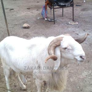 Halal Animals | Other Animals for sale in Northern Region, Gushegu