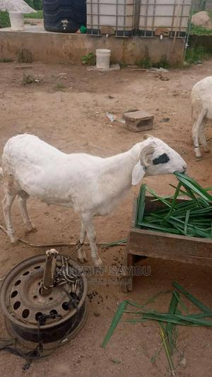 Contact Me for Good Animal | Other Animals for sale in Northern Region, Chereponi