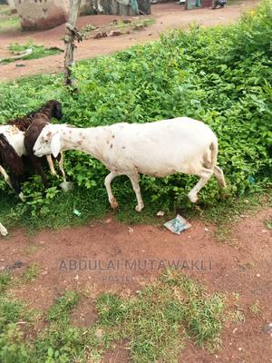 Good Animals Here for Sale | Other Animals for sale in Northern Region, Central Gonja