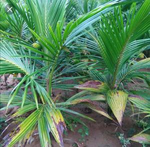 Farmland for Sale at Nsawam   Land & Plots For Sale for sale in Eastern Region, Akuapim South