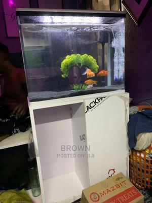 Black Soil Aquarium | Fish for sale in Ashanti, Kumasi Metropolitan