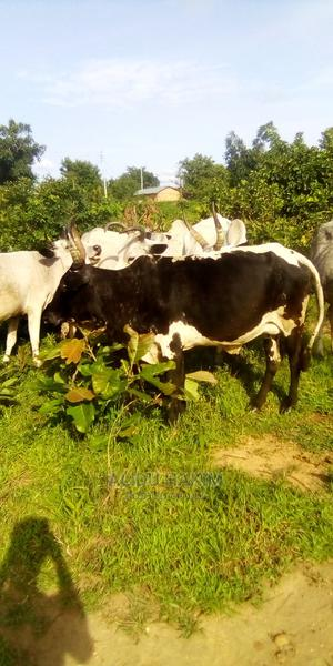 Own for Sale | Other Animals for sale in Northern Region, Gushegu