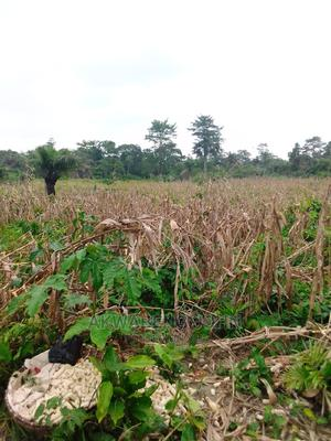 We're Looking for Any Agriculture NGO,S to Aquire Dis Land   Land & Plots for Rent for sale in Western Region, Wasa Amenfi West