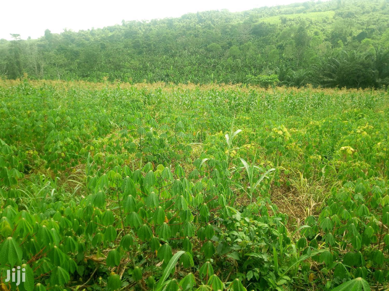 15 Acres of Virgin Farmland for Sale