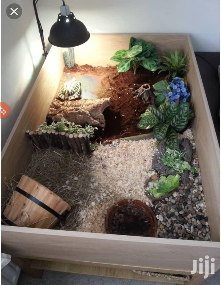 Archive: Turtle Home