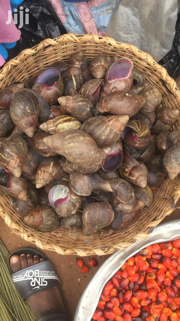 Red & Black Snails | Livestock & Poultry for sale in Asylum Down, Greater Accra, Ghana