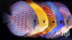 Discuss Fish | Fish for sale in Ashanti, Kumasi Metropolitan