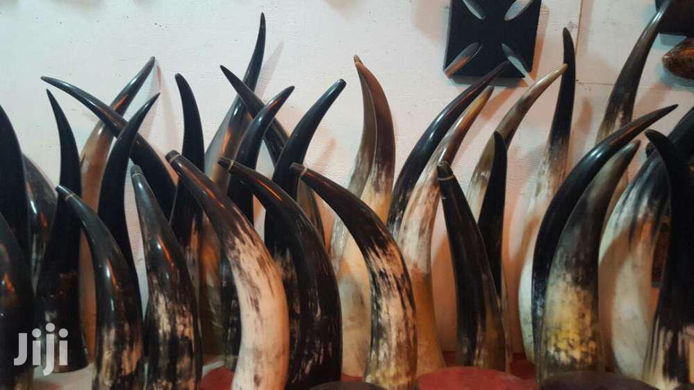 Antelope, Ram And Cow Horns Available