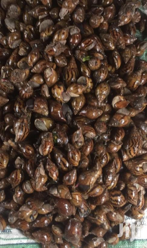 Archive: Health Snails For Sale