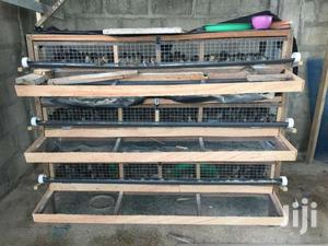 We Sellquail Chicks Fro Day Old To 3 Weeks At Affordable Price | Livestock & Poultry for sale in Ashanti, Kumasi Metropolitan