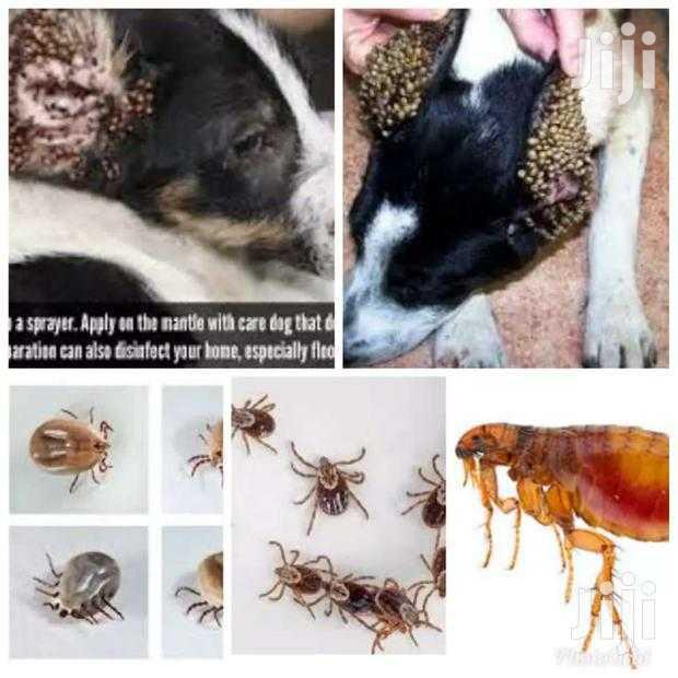 Fleas And Ticks Pesticides Control Services