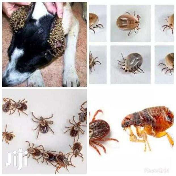 Fleas And Ticks Pesticides Control Services   Cleaning Services for sale in Accra Metropolitan, Greater Accra, Ghana