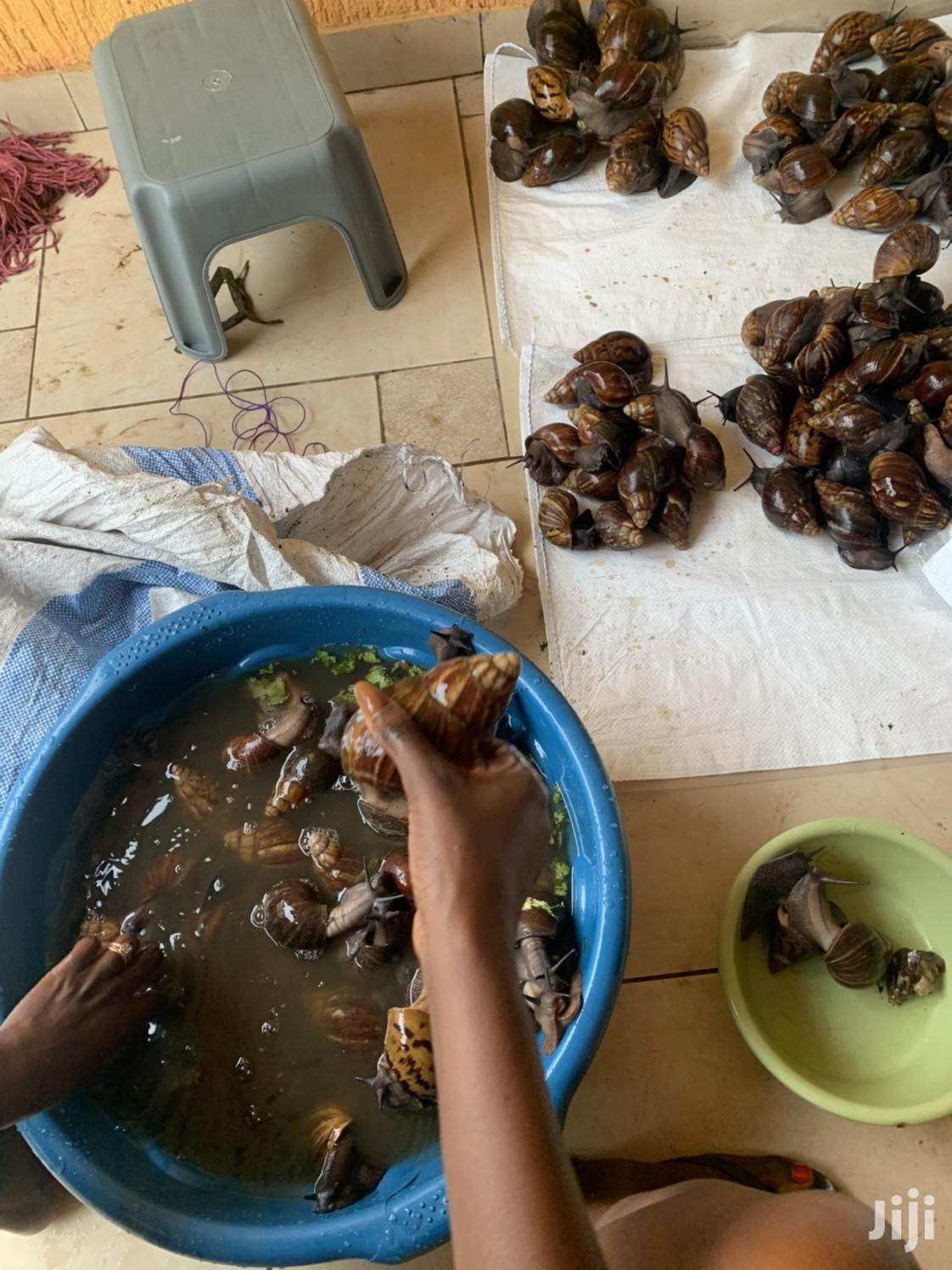 Super Big Snails | Other Animals for sale in Ga South Municipal, Greater Accra, Ghana