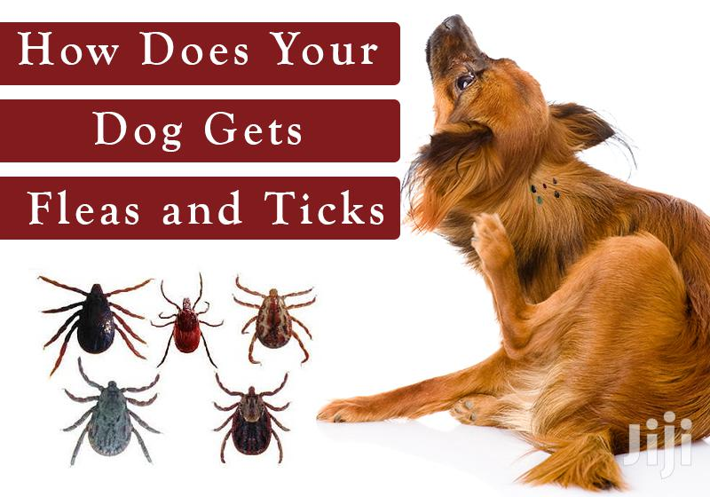 Archive: Treating Ticks And Fleas (Ectoparasites)
