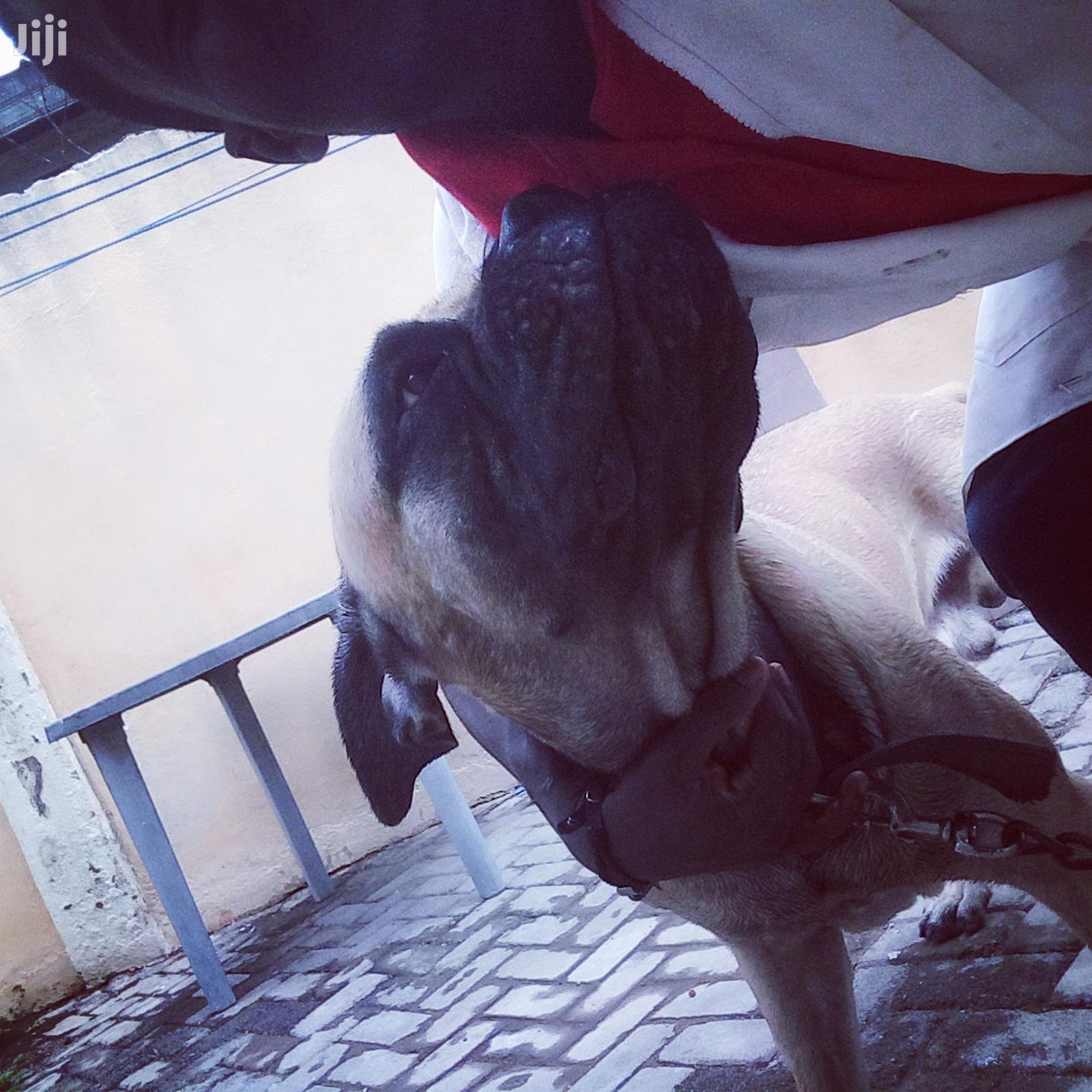 Mvet Veterinary Home Service