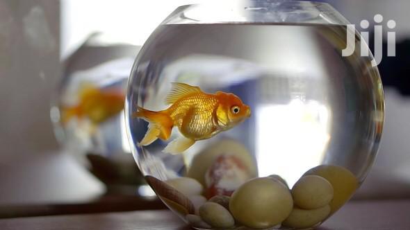 Archive: Aqurium Fish