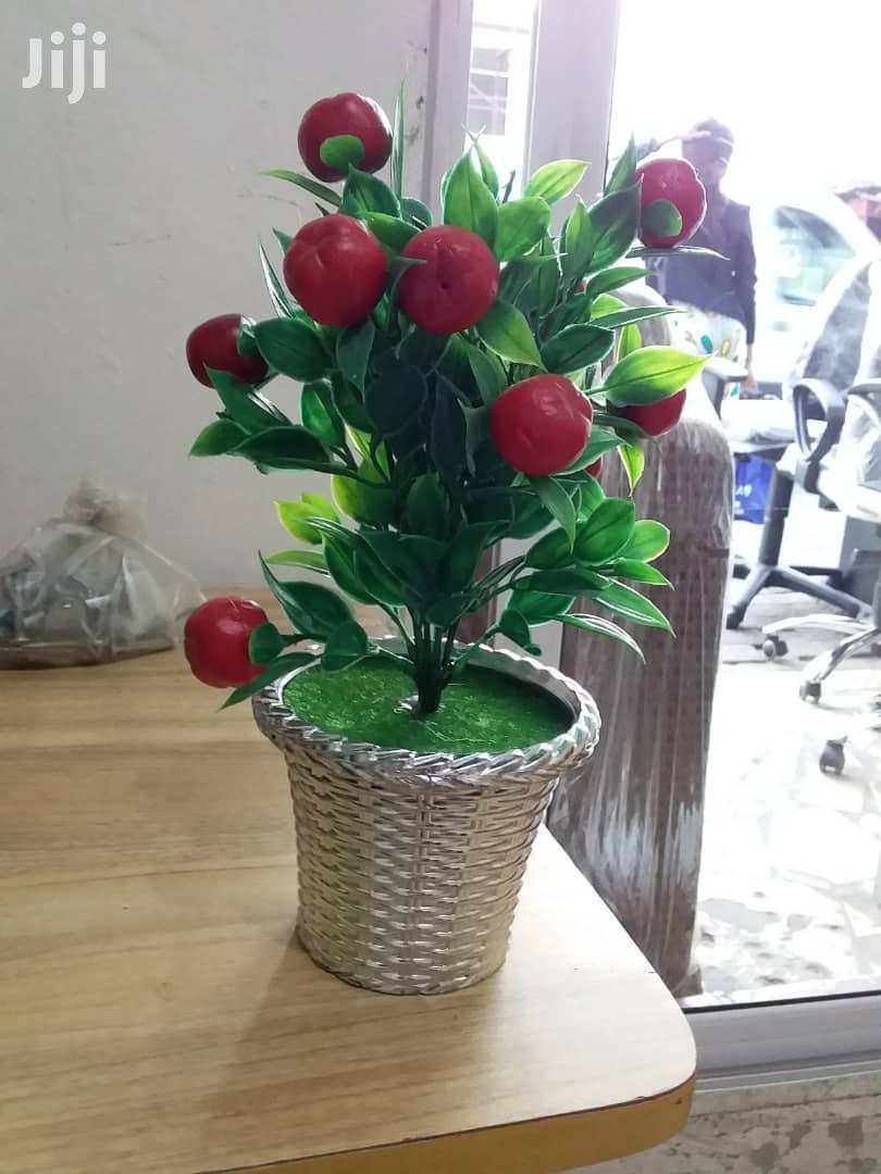 Affordable Flowers | Garden for sale in Kokomlemle, Greater Accra, Ghana