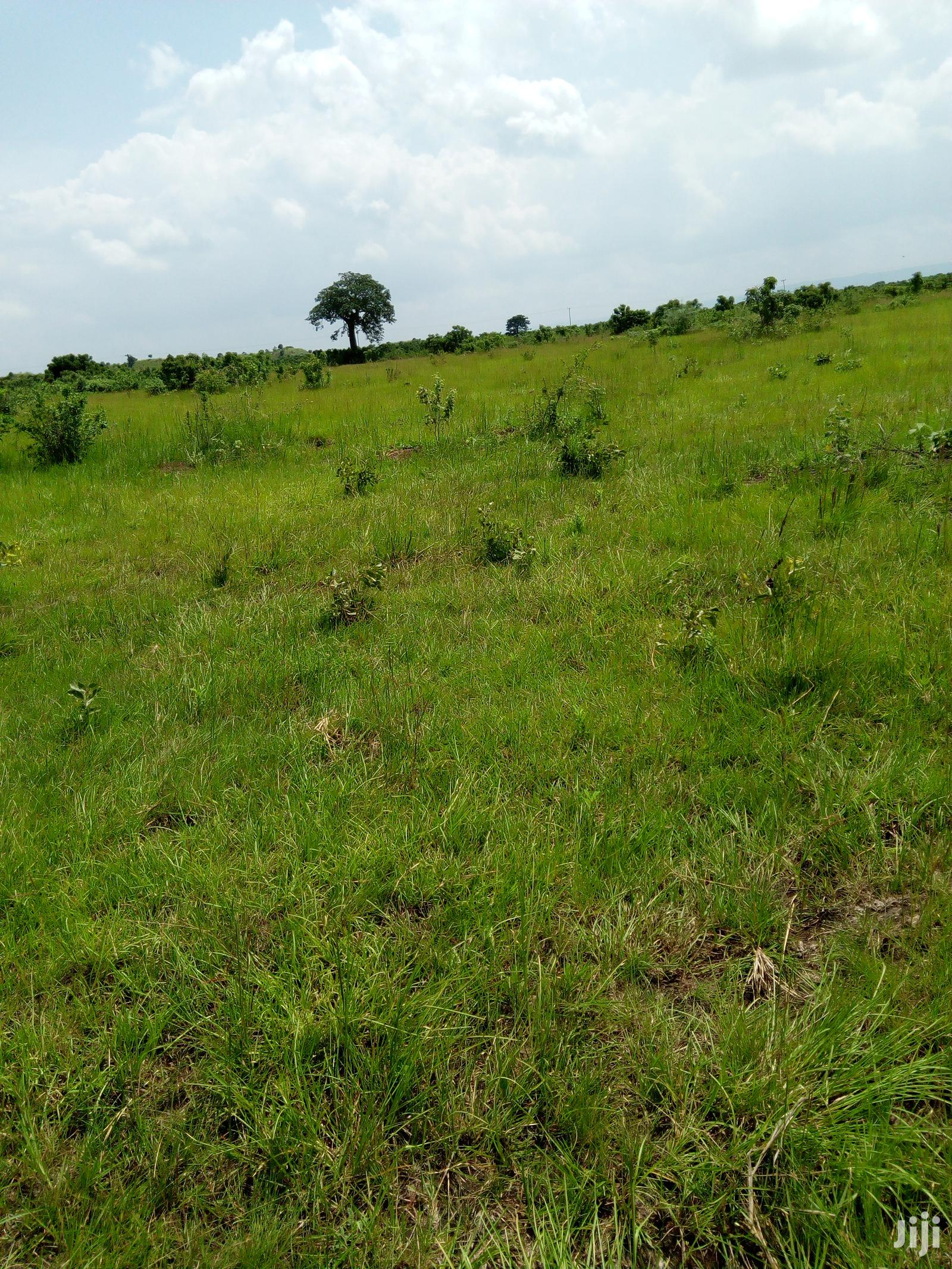 Archive: Farming Land 4 Long Lease&Sale Asutsuare,Nsawam,Sogakope
