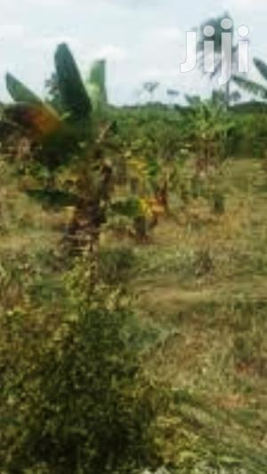 Cashew Farmland For Sale.Jema,Kintampo, Nkoranza,Nsoatre, Seikwa,Sampa   Land & Plots For Sale for sale in Brong Ahafo, Sunyani Municipal