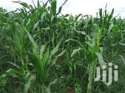 Sorlim Farms Co. Ltd Has Fertile, Litigation-free Farmlands For Sale. | Land & Plots For Sale for sale in Eastern Region, Fanteakwa