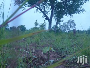 Agriculture Land For Lease In Bono East Region   Land & Plots for Rent for sale in Brong Ahafo, Kintampo North Municipal