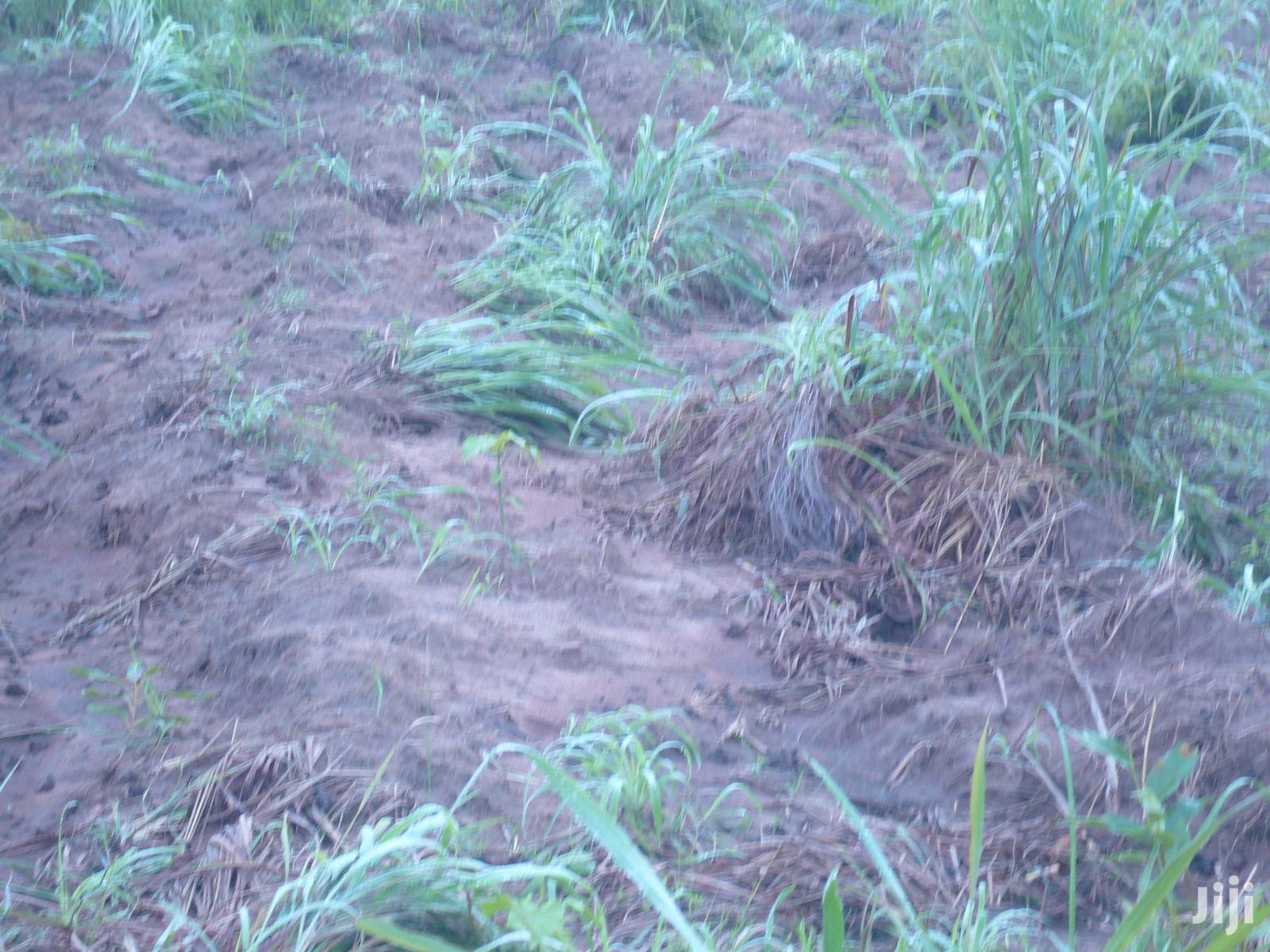Agriculture Land For Lease In Bono East Region | Land & Plots for Rent for sale in Kintampo North Municipal, Brong Ahafo, Ghana