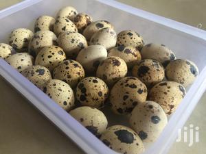 Fresh Quail Eggs For Sale.