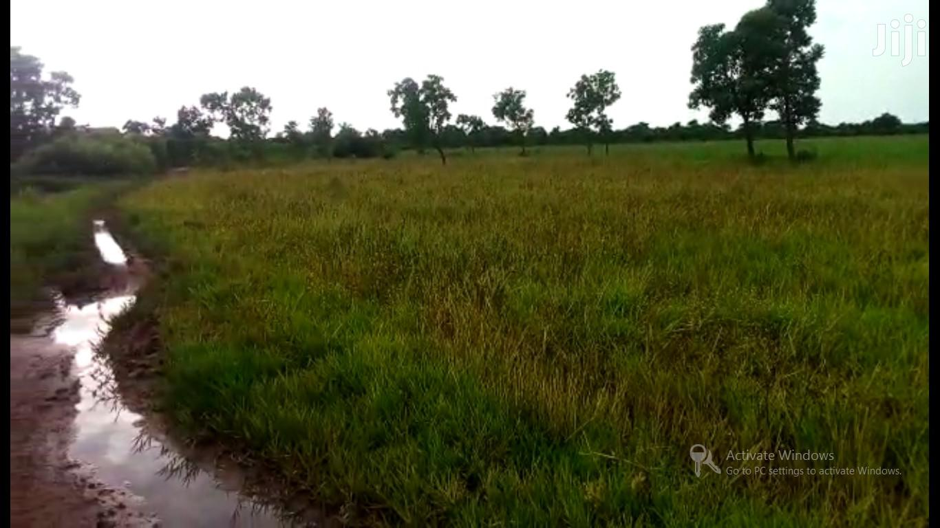 KINTAMPO DIST, BONO REGION - 400+ Acres of Rice Farmland