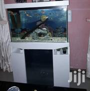 Fish Tank | Fish for sale in Greater Accra, East Legon
