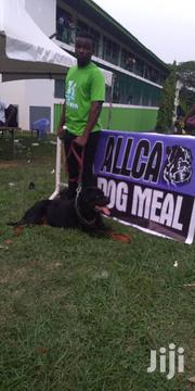 Allca Dog Feed | Pet's Accessories for sale in Greater Accra, Accra Metropolitan
