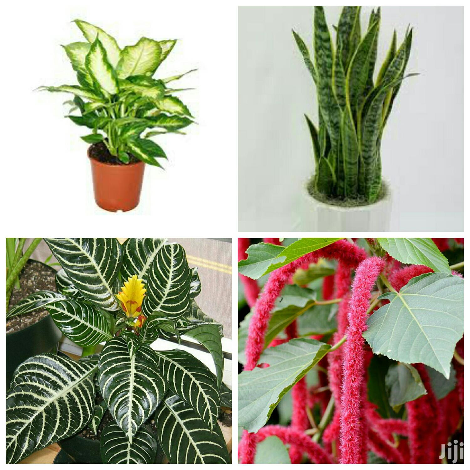 Archive: Indoor Plants For Sale