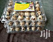Quail Eggs | Meals & Drinks for sale in Greater Accra, Adabraka