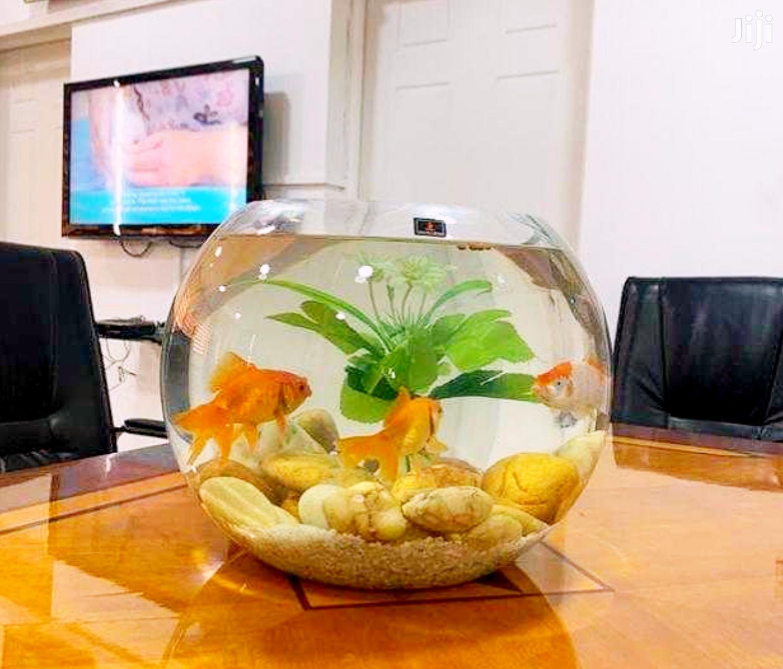 Aquarium Fish Bowl